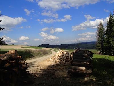 Grzyby wiosenne, grzyby w maju, grzybobranie wiosenne, grzybobranie w maju, smardze, gdzie szukać i zbierać smardze, grzyby na Orawie, grzybobranie na Słowacji
