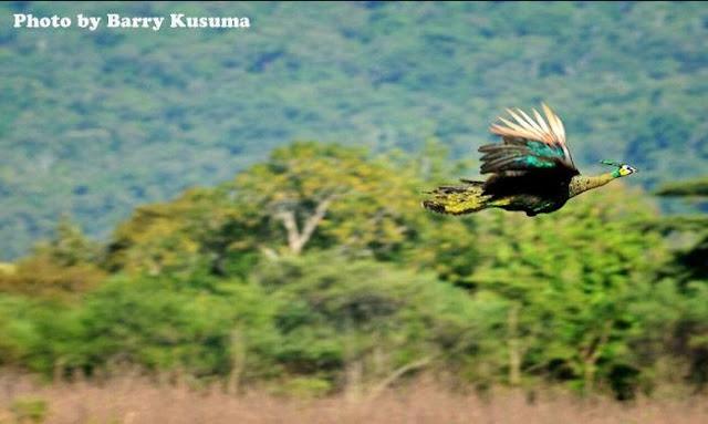 hasil foto hewan pada alam liar - TipeKamera.com