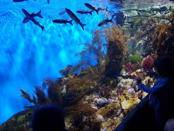 magnifique-aquarium-rochelle-visite-poissons-requins