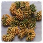 http://www.foamiran.pl/pl/p/srodki-do-kwiatow-mini-matowe-cieniowane-/800