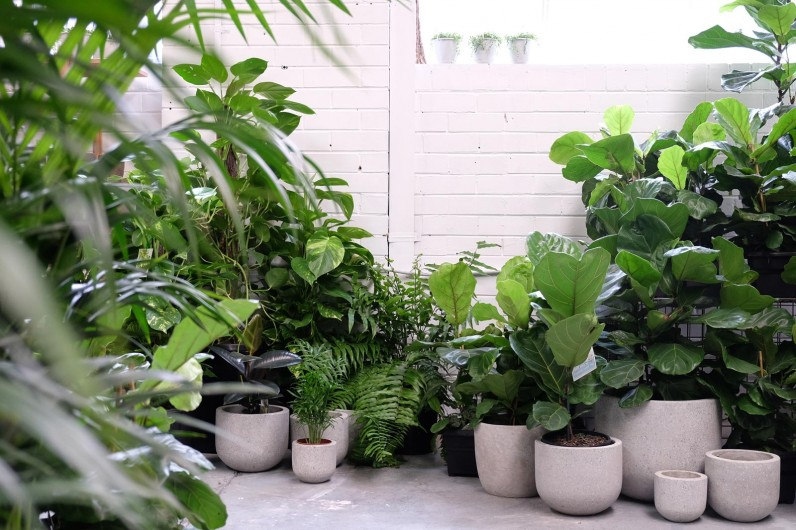 Why Houseplants Drop Leaves Frillfeed