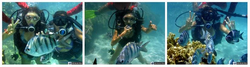 Mergulho com cilindro em Maragogi (Alagoas) - o Caribe Brasileiro