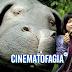 """Crítica: """"Okja"""" é um filme caricato e panfletário pronto para a Sessão da Tarde"""