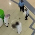 5-year-old girl falls to her death in a shopping mall..photo