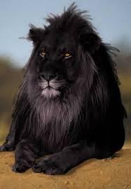 Resultado de imagen para león negro