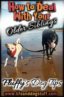 How to Deal With Your Older Siblings - Fluffy's Dog Tips