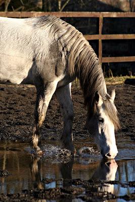 Horse Photo - Bella