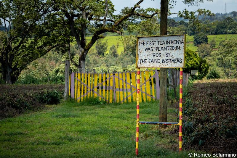 First Tea in Kenya Volunteering in Kenya with Freedom Global