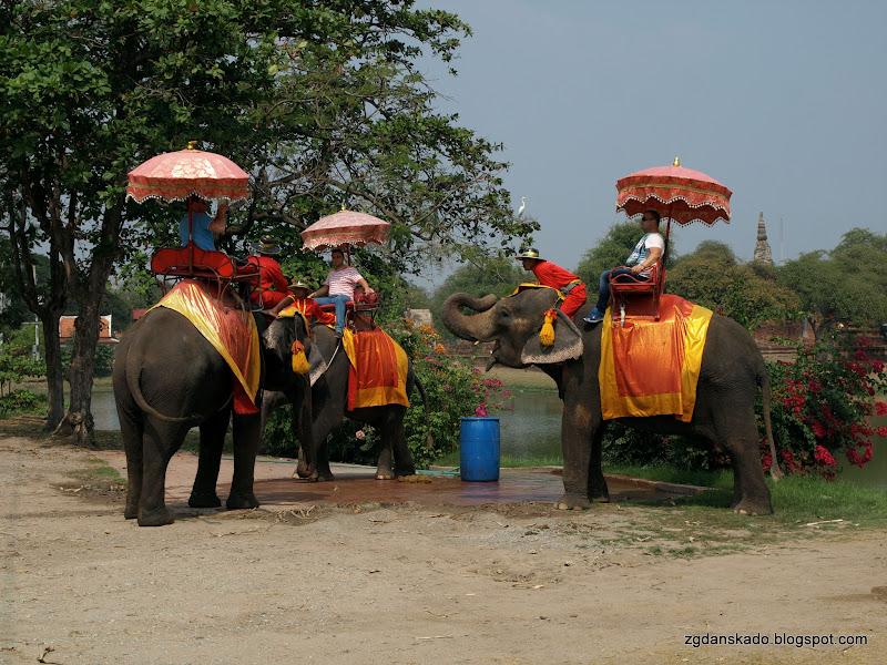 Ayutthaya - słonie