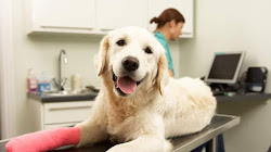 Pet Insurance Is Exponentially Developing In The USA