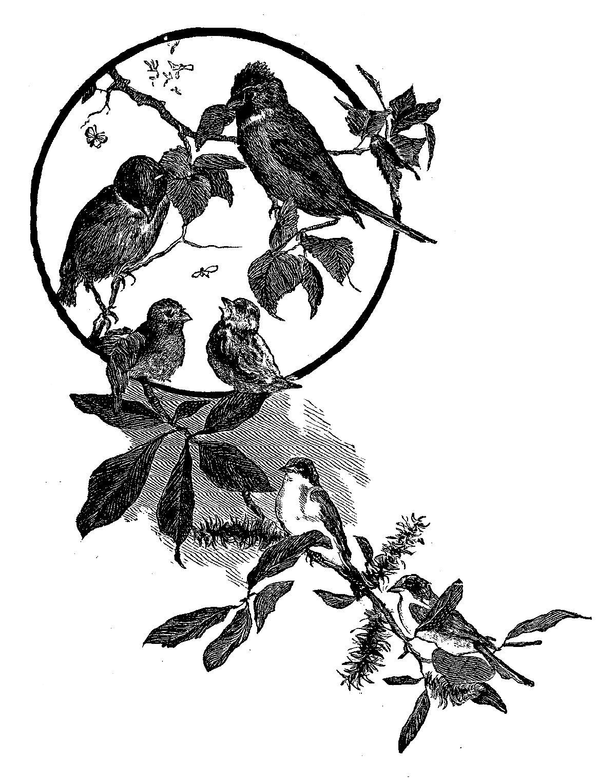 Digital Stamp Design Digital Bird Illustration Flower