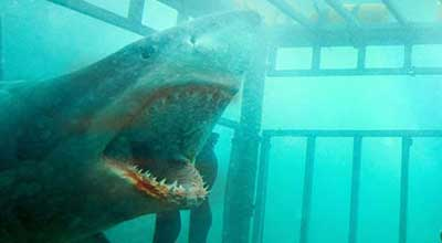 Shark Night 3D, secuencia de la película dirigida por David R. Ellis