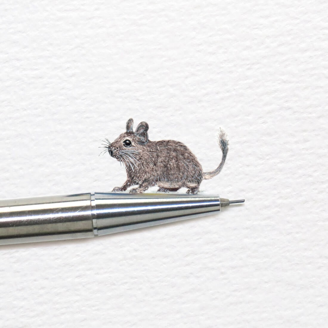 09-Degu-Frank Holzenburg Miniature Drawings and Paintings of Animals-www-designstack-co