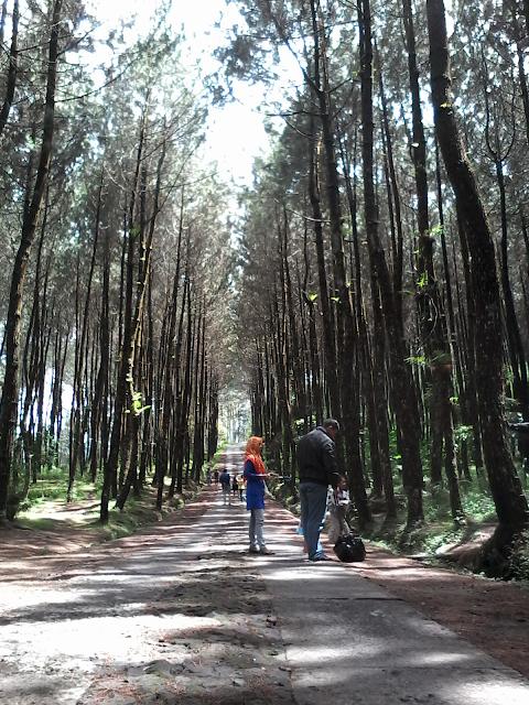 Hutan Pinus Kragilan Lereng Gunung Merbabu