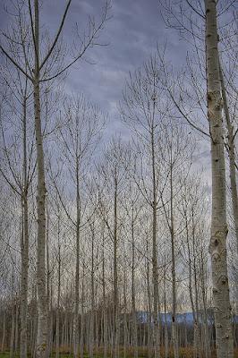 Bosc a Sils