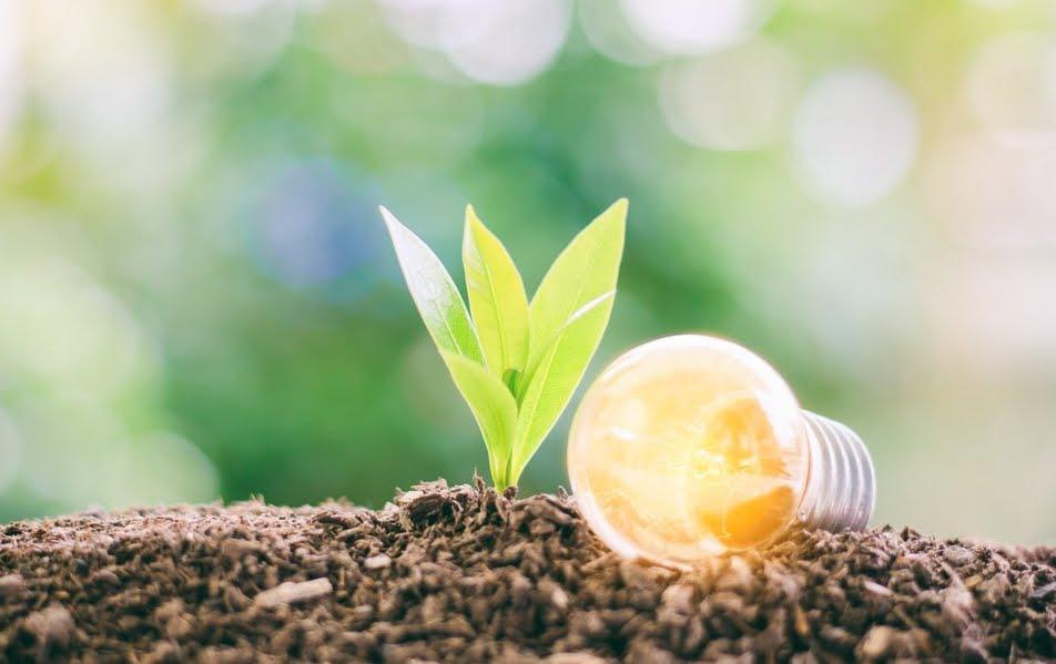 Generare energia elettrica attraverso piante e batteri.