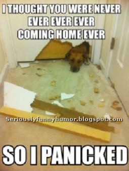 Dog - I thought you were never ever ever ever coming hoe ever - so I panicked! :p