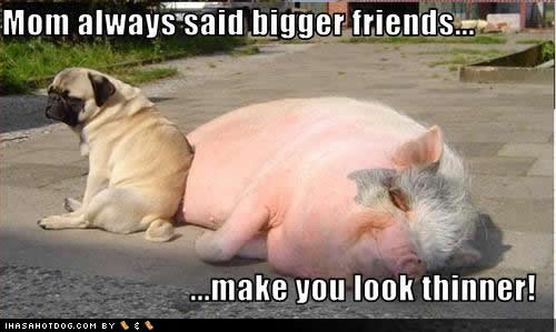 Funny fat dogs images  Funny Animal