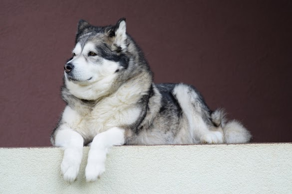 20 types of types of Dogs with pictures of her