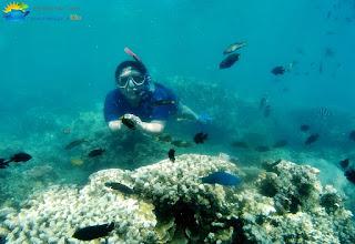 wisata snorkeling