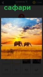 Под палящим солнцем на поле бродят слоны и другие животные. Все готово для сафари
