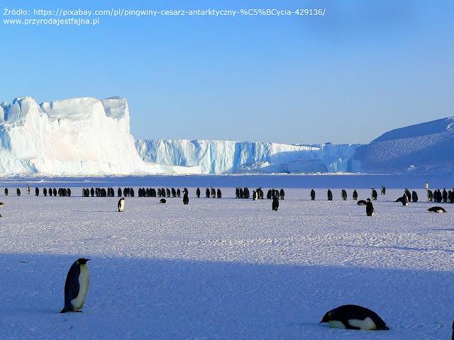 pingwiny, zabawy dla dzieci, książki o pingwinach, DIY