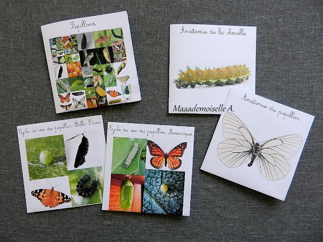 || Cartes de nomenclature : Papillons, cycle de vie et anatomie (papillon et chenille)