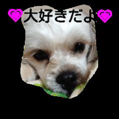 macaron dogs cute LOVE
