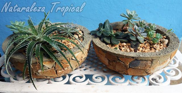 Macetas de hormigón con plantas suculentas