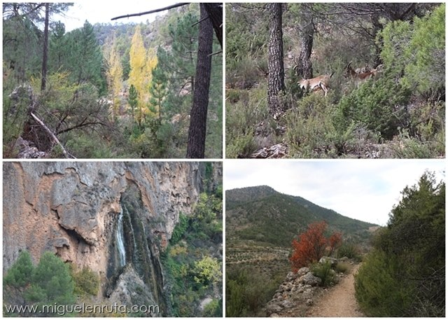 Fauna-flora-Bogarra-Albacete