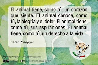 ¿Cuales son los derechos de los Animales?