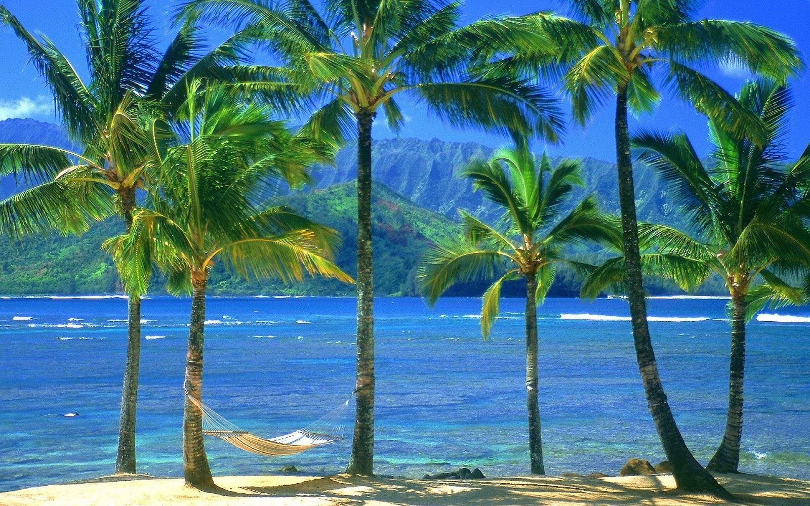"Palm Trees On The Beach: Wallpaper: Wallpaper: Gift Of Nature ""Sea Beach Natural"