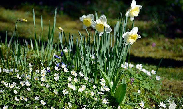 Gartenfreude im März