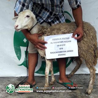 Jual Kambing Domba untuk Ibadah Aqiqah Klaten