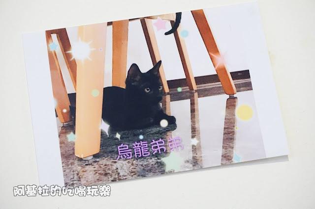 14525148 1099288343457743 5647461715820753774 o - 熱血採訪 朵貓貓咖啡館 - 貓咪餐廳