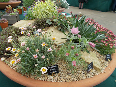 Large alpine pot RHS Cardiff Show 2018 Green Fingered Blog
