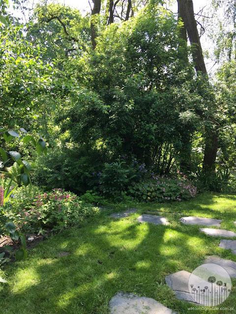 jak urzadzic ogrod w cieniu