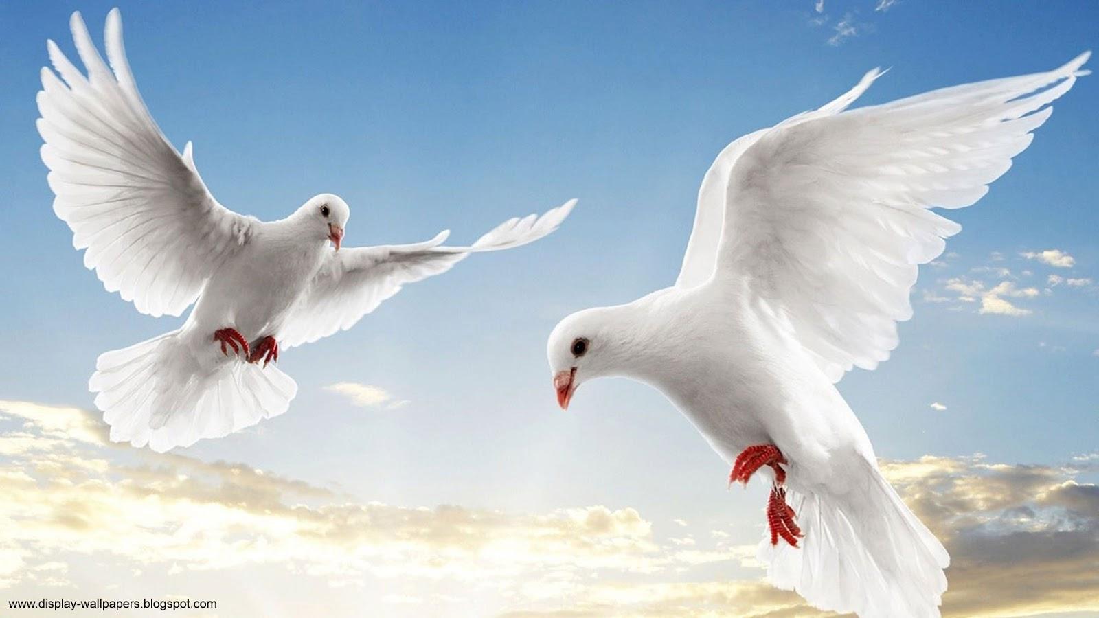 Animals Wallpaper Hd 1080p | Download Wallpaper,Desktop ...