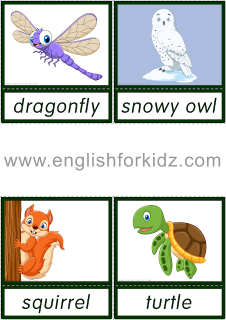 Animals flashcards belonging to the reading comprehension kit