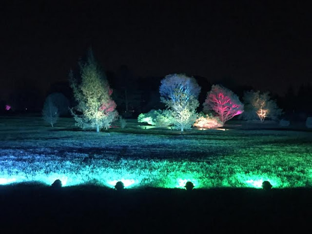 Children airbrush trees with light at Illumination at The Morton Arboretum.