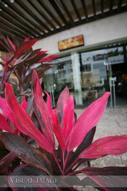 Pink flower in front of Vida Salon and Day Lounge
