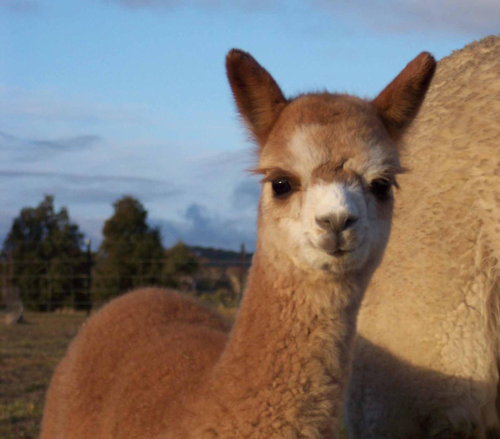 Animal Zoo Life: |pictures of pets|pet photos|pet ...