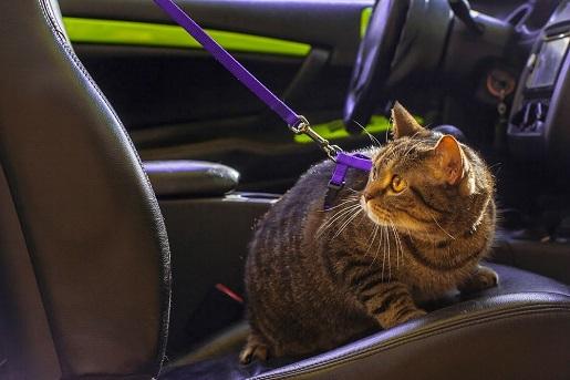 Jak przygotować psa i kota do podróży samochodem