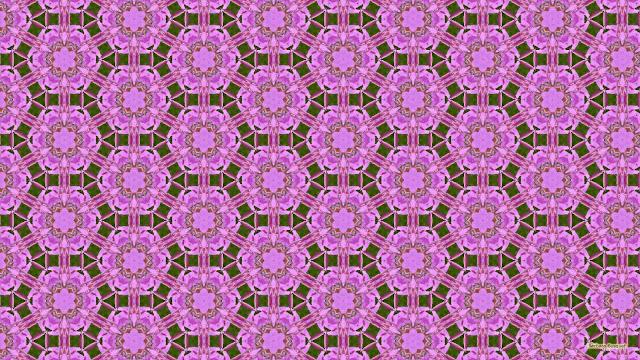 Patroon achtergrond met roze bloemen