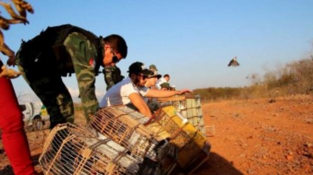 Durante fiscalização FPI resgata 2.040 animais, recupera e reintroduz a natureza