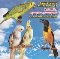 CD CALOPSITAS BAIXAR CANTO DAS