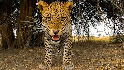 Serengeti 2019 Image 1