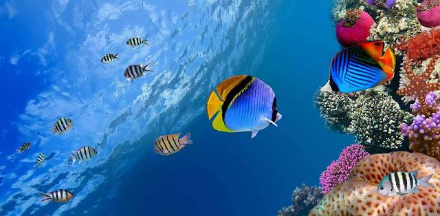 Fondos oceanicos y corales