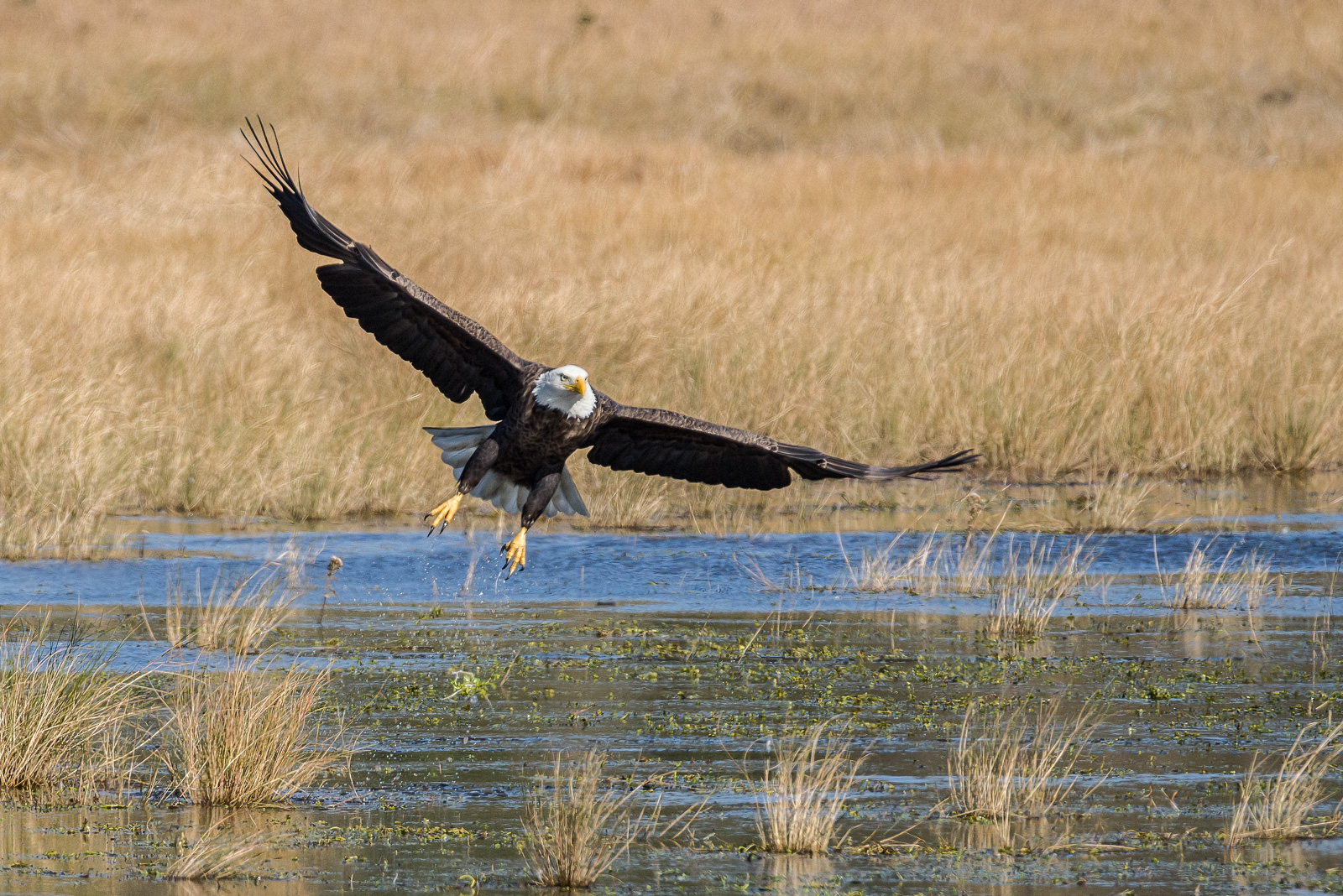 Wildlife Photography Weekend Renting A Lens And Comment On The