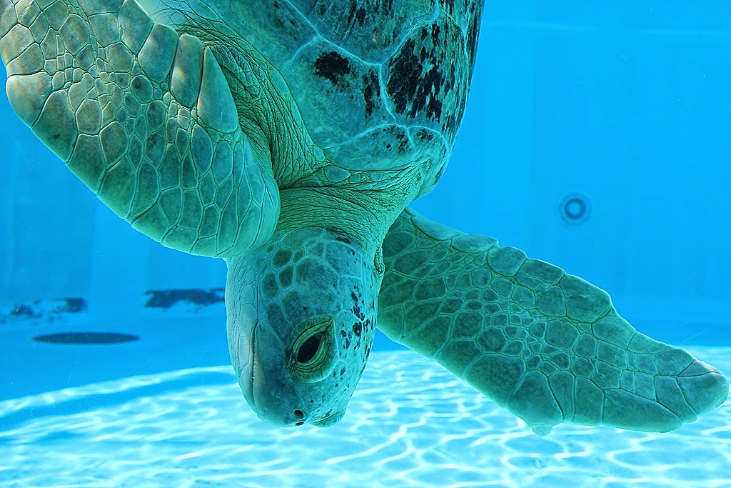Clearwater Marine Aquarium em Clearwater na Flórida